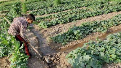 تصویر پیشگیری از ابتلا به ویروس کرونا برای کشاورزان